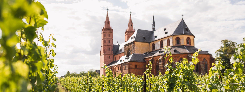Die Liebfrauenkirche mit Weinreben im Vordergrund, Worms